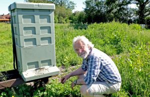 Peter Coxon at the apiary